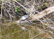 Dieren spotten bij de Reeuwijkse Plassen
