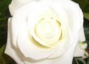 Helingmorgen in De Witte Roos