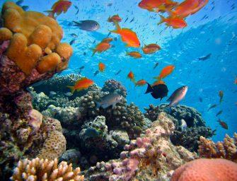 Vereniging Aquafauna organiseert vakantie snorkelcursus