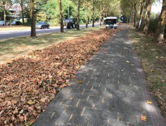Bomen laten hun bladeren vallen door de droogte