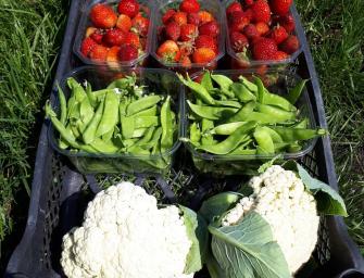 Een grote stap op weg naar lokaal en duurzaam geproduceerd voedsel