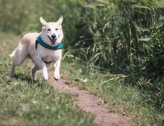 Ingezonden brief: Loslopende honden?
