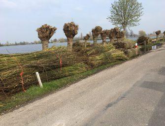 Unieke wilgenfundering voor Hortemansdijk