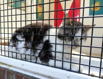 De Oude Zustertuin zoekt baasje van kat