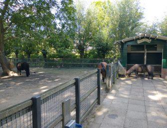 Pony Wiske krijgt gezelschap bij kinderboerderij De Oude Zustertuin in Bodegraven